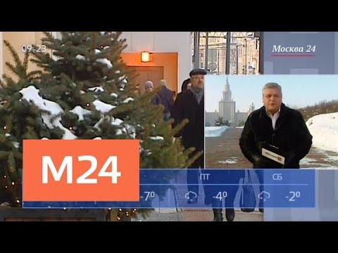 """""""Утро"""": в столице будет преобладать солнечная и сухая погода - Москва 24"""