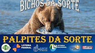 PALPITES JOGO DO BICHO PARA SEXTA FEIRA 24/05/19