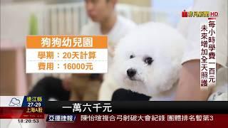 【非凡新聞】背書包上學! 狗狗幼兒園把寵物當小孩教