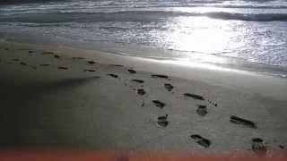 Rainhard Fendrich - Spuren im Sand
