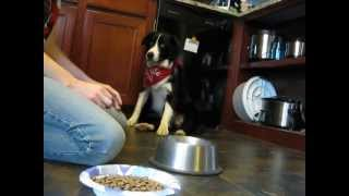 My Dog Won't Eat (training)