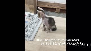 ガリガリの猫拾ってきたらすごい綺麗な毛並みになった。【猫LIFE】 thumbnail