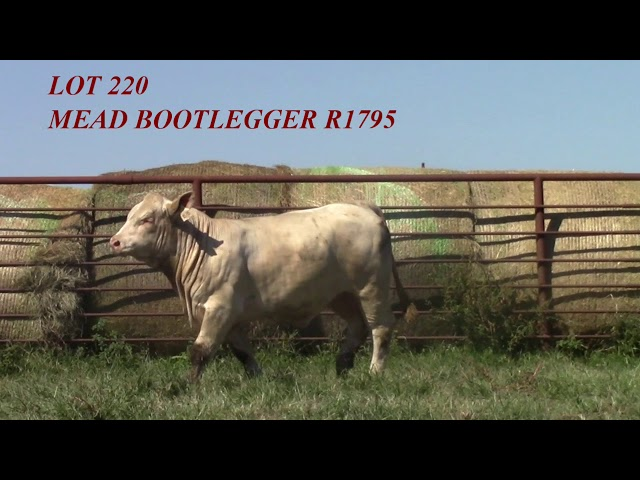 Mead Angus Lot 220