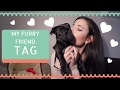 FURRY FRIEND TAG | FEBRUARY 2017
