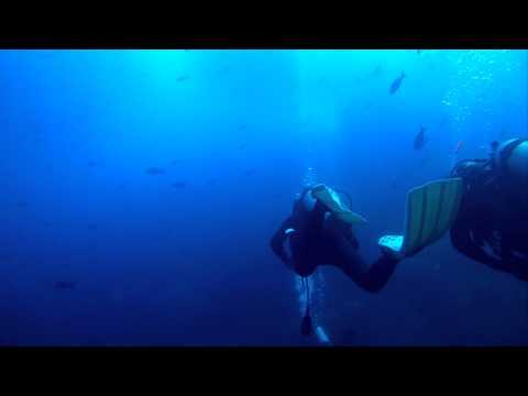 Diving Golden cownose ray, Galapagos shark, MolaMola at Gordon Rocks