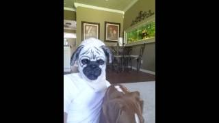 Realistic Pug Dog Mask With Moving Jaw!