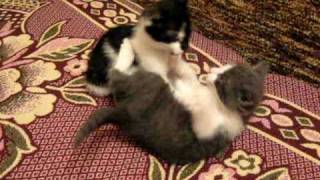 Мы весёлые котята