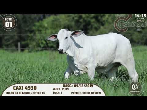 LOTE 01   CAXI 4930
