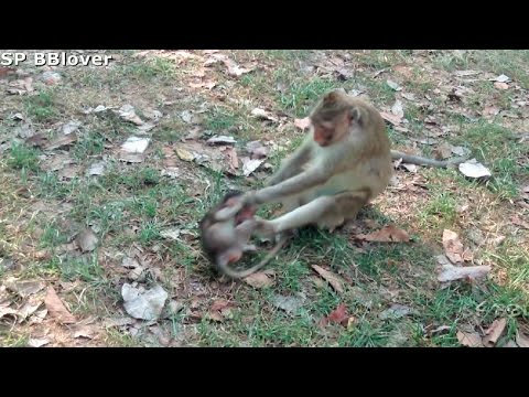 Natural Life Vivi Ep 29 - Baby Monkey Cry Because Mom Hit For Not Breastfeeding - Real Life