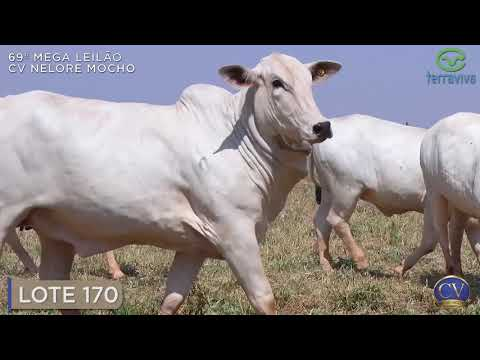 LOTE 170