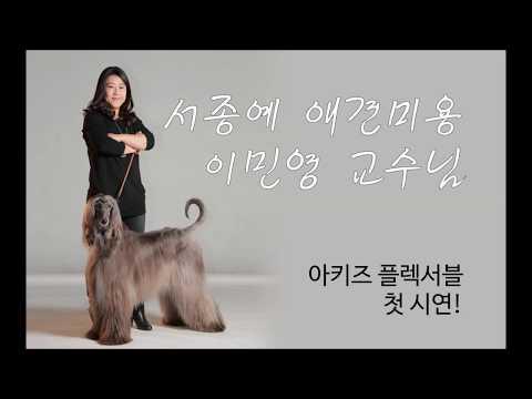 애견미용계의 아티스트 이민영 교수님이 강추#AKITZ#셀프미용 #미용 #셀프애견  #아키즈 #아키즈플렉서블#브러쉬#self#cats hair cut #dog grooming