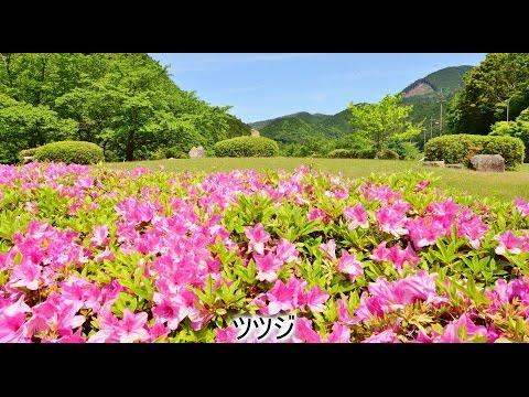 5月の花(4K) Bird View JAPAN(空撮ではありません)