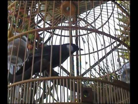 Con Chim của tôi