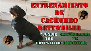 ENTRENAMIENTO CACHORRO ROTTWEILER (Recopilación de ejercicios) 'JUNIOR THE ROTTWEILER'
