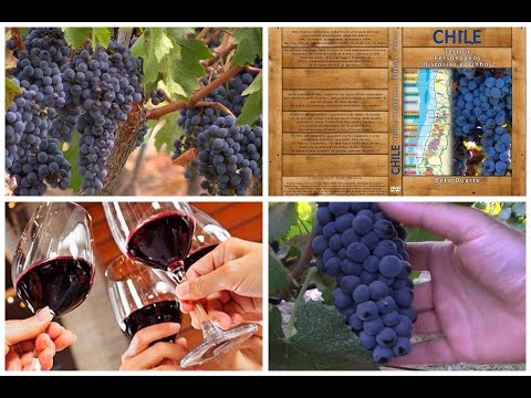 Full Documentary - Chile - Terroir, Characters, Stories, Wines...