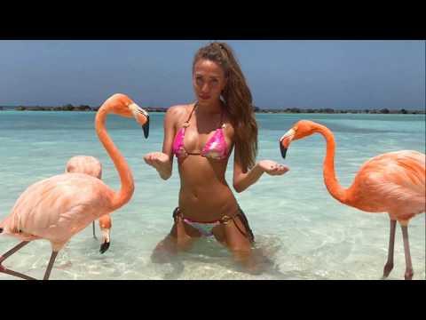 HANK MARVIN Flamingo