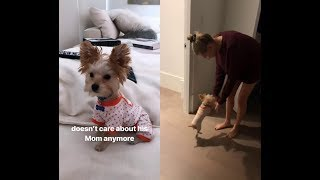 Justin Bieber filming Hailey Baldwin Bieber & puppy Oscar Bieber in cute outfit - March 9, 2019
