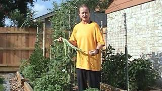 Gardening Tips Asparagus Beans Foot Long.mpg