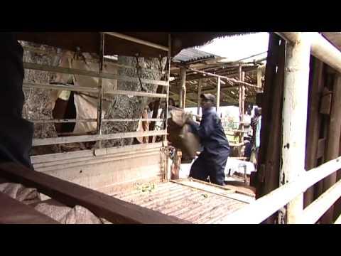 Global Development Co-operative Launch Film