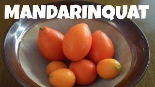 MANDARINQUAT & KUMQUAT Taste Test  | Fruity Fruits