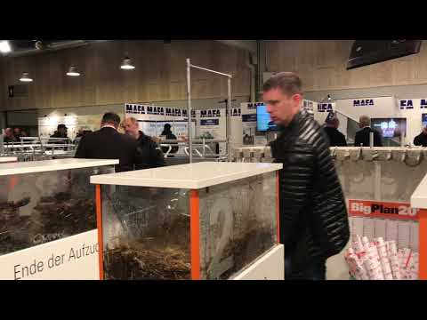 Big Dutchman (Skandinavien) A/S på Agromek 2018