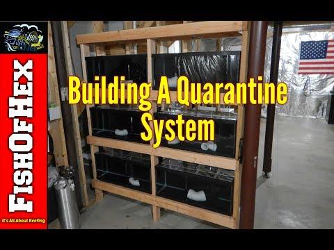 Quarantine System | Fish Room Setup Part 8