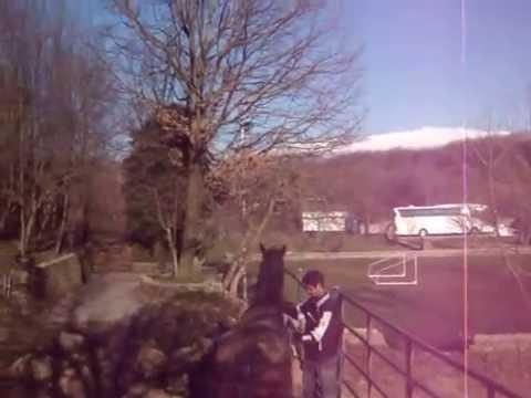 Mustang ranch Sinj Croatia_horses