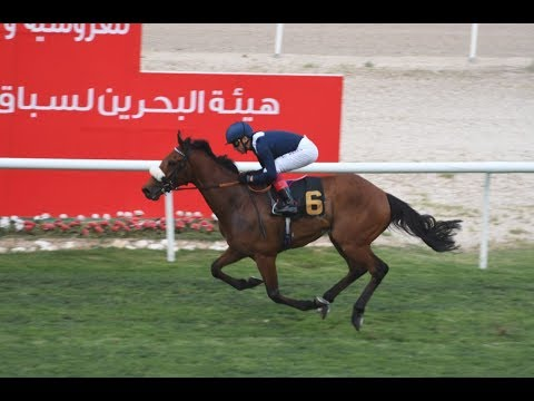 Thorkhill Star (IRE) - 2018 Bahrain Gold Cup