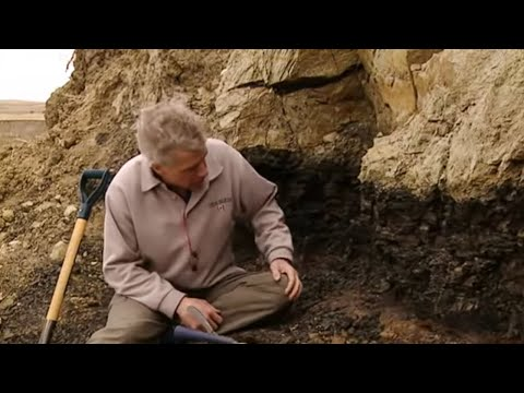 Asteroid attack 2   Where's the evidence?    What Really Killed the Dinosaurs?   BBC