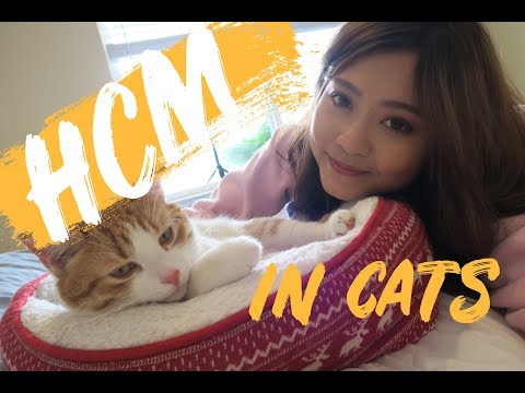 CATS WITH HEART DISEASE | How I Care For My Cat With HCM