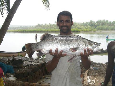 Seabass Cage Culture India (Success Full Harvest) Part 1