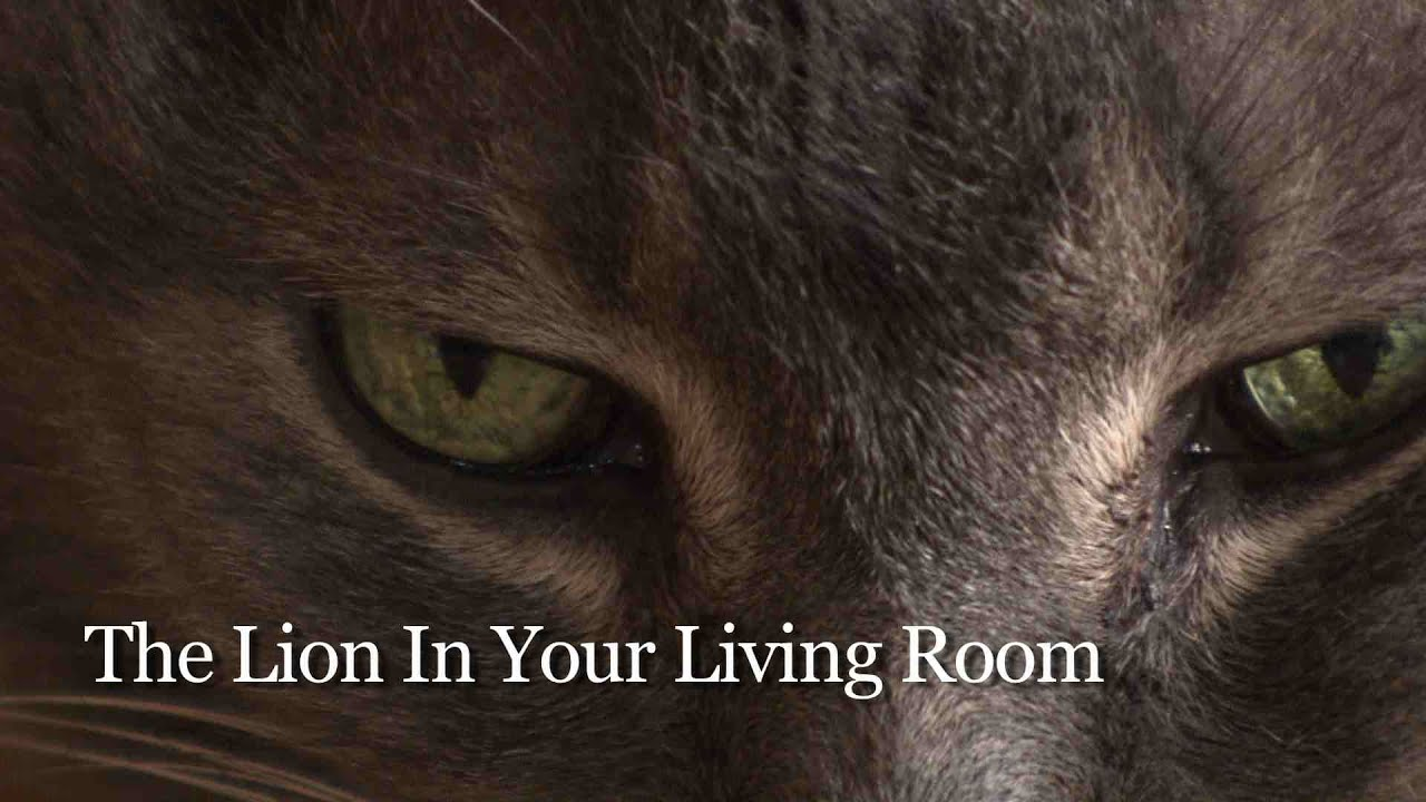The Lion In Your Living Room Trailer Nice Houzz