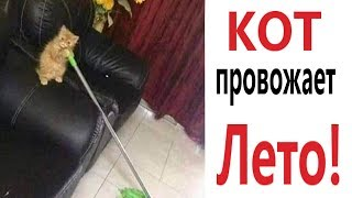 Лютые приколы. КОТ ПРОВОЖАЕТ ЛЕТО!!! Ржака до слёз! ТЕСТ НА ПСИХИКУ - Domi Show