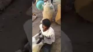 Dog Biting Man very funny 😀😀