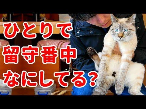 留守番中の猫の様子を撮影してみたら、意外な行動がかわいすぎた!