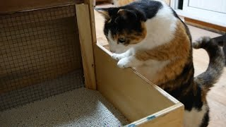 Creating accessories for Samsaek's house [Building a semi-automatic cat litter box]