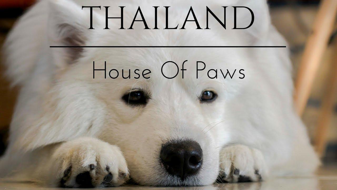 House Of Paws Dog Cafe In Bangkok