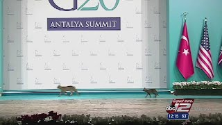 Stray cats scurry across G20 summit stage