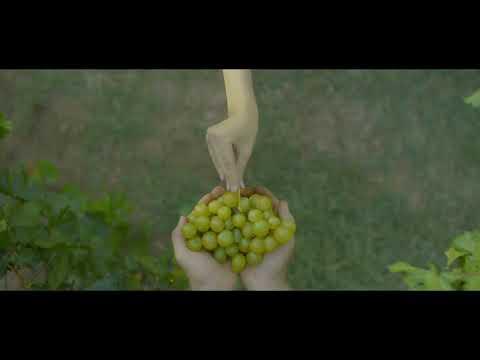 wine tourism Moldova