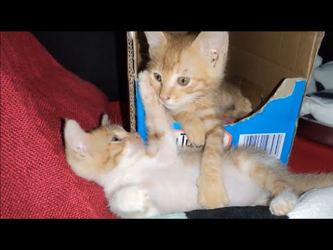 Cute twin kittens morning chat!Melted my heart!