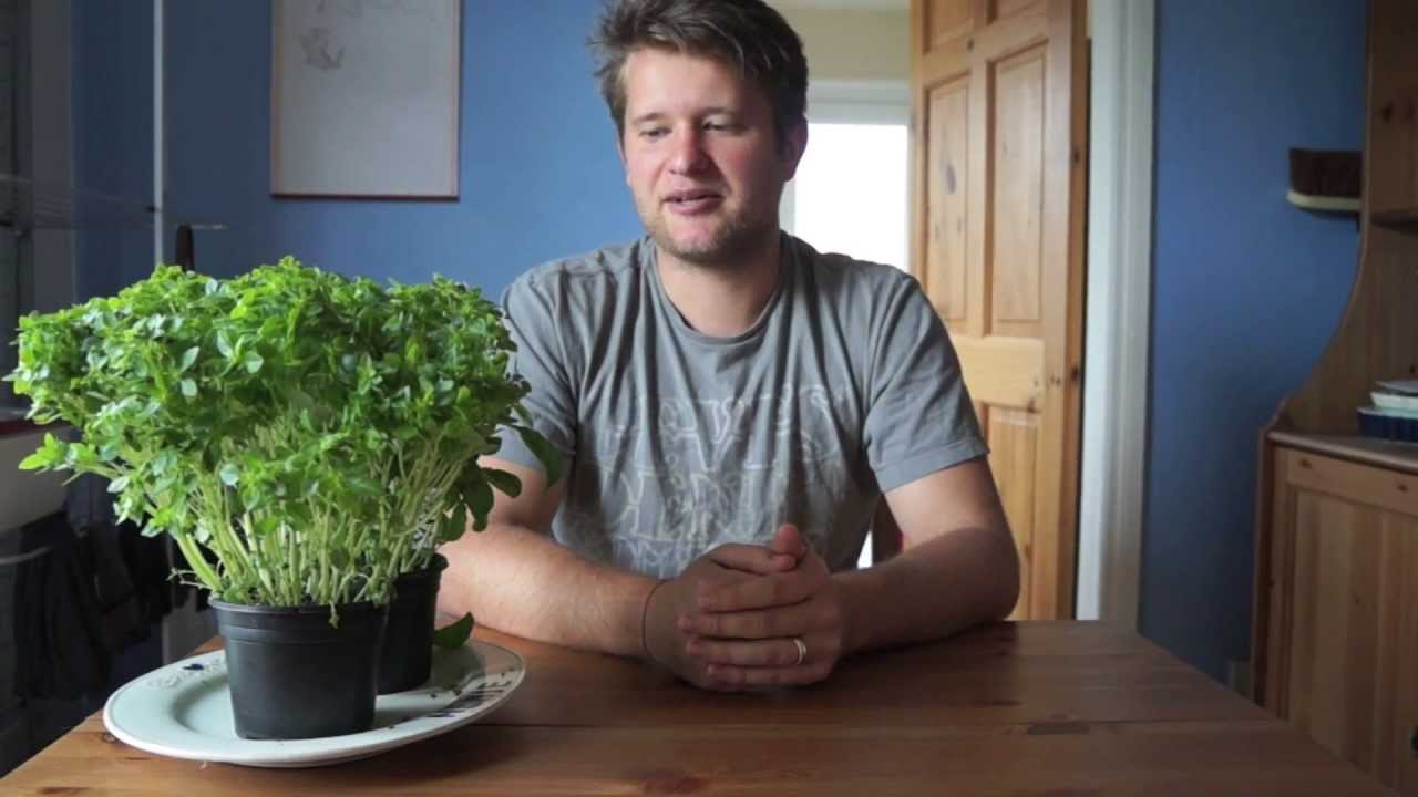 quicktip how to care for shop bought basil plants youtube