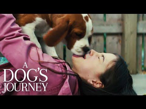 A Dog's Journey | Bailey Sees CJ | Film Clip | Own It Now On Blu-ray, DVD & Digital