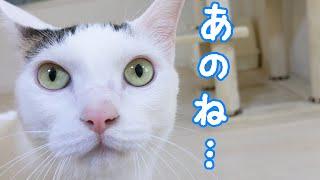 色々と伝えたくてたくさんお喋りする猫チロさん