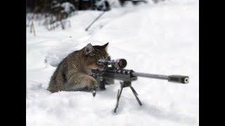 Стрим снайпер