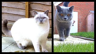 LETTING OUR CATS OUTSIDE!   CHRIS & EVE