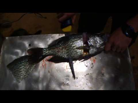 How to clean Crappie two ways
