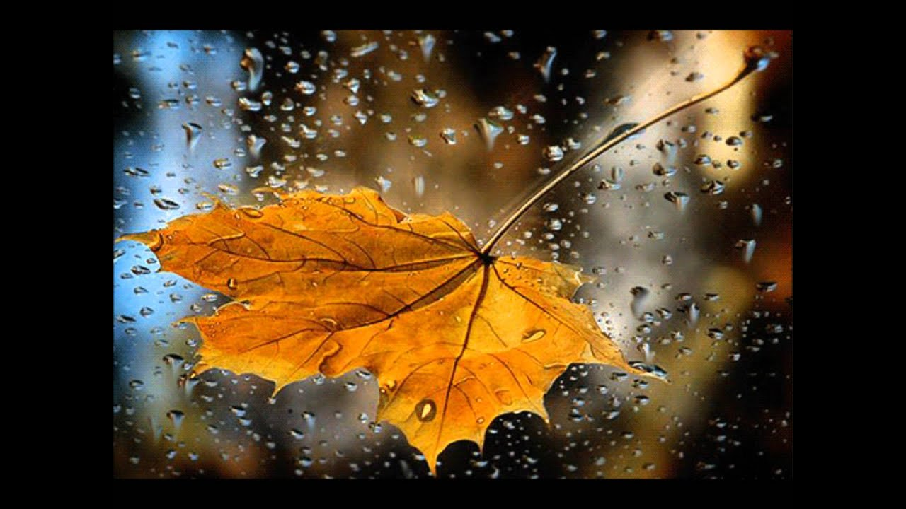 Днем, картинки доброе утро дождь осень надпись