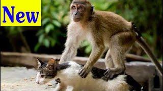 Обезьяны Против Кошек || Смешные Видео Компиляции Животных