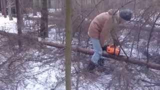 Вырубка деревьев и кустов(Компания ООО