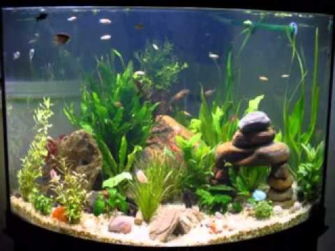 Easy diy ideas for aquarium decoration youtube for Aquarium decoration diy